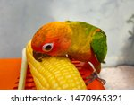 Blurry Colorful Parrot Eating...