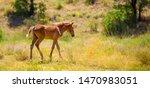 Horse And Newborn Foal  A Herd...