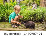 The Boy Feeds The Rabbit....