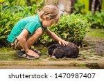 The Boy Feeds The Rabbit....
