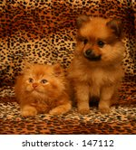 Stock photo photo of a pomeranian dog and persian sitting together 147112