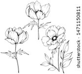 anemone floral botanical...   Shutterstock . vector #1471150811