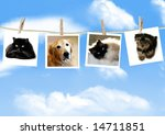 Stock photo photos of dogs and cats hanging from a clothes line 14711851
