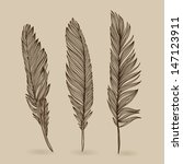 feathers of bird   vector retro ... | Shutterstock .eps vector #147123911