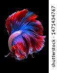 Betta Fish  Siamese Fighting...