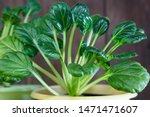 Natural Vegetarian Food  Raw...
