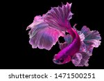 "Small photo of Pink betta fish ""Fancy Halfmoon Betta"" The moving moment beautiful of Siamese Fighting fish in Thailand. Betta splendens Pla-kad (biting fish), Rhythmic of Betta fish isolated on black background"