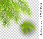 set of beautiful palm tree... | Shutterstock .eps vector #1471674584
