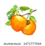 Persimmon Fruits On Branch Wit...