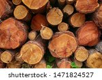 Pattern Folded And Felled Logs...