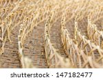 row of bamboo weave  a worm... | Shutterstock . vector #147182477
