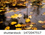 Maple Yellow Autumn Leaves In A ...