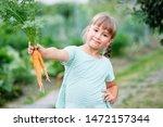 little girl picking carrots in... | Shutterstock . vector #1472157344