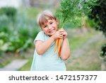 little girl picking carrots in... | Shutterstock . vector #1472157377