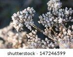Frozen Dry Plant Under Sunligh...