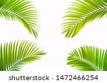 tropical and coconut leaf... | Shutterstock . vector #1472466254