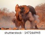 large african elephant ... | Shutterstock . vector #147266945