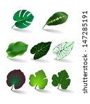 leaves set  vector eps 10 | Shutterstock .eps vector #147285191