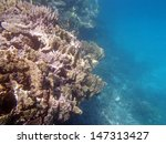 snorkeling in the red sea | Shutterstock . vector #147313427