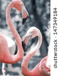 Pink Flamingos Against Blurred...