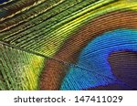Macro Image Of Peacock Feather...