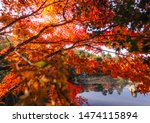 japanese garden and  fall... | Shutterstock . vector #1474115894