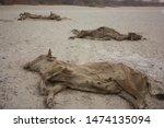 Famine Desert Animal Death...