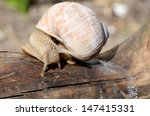 the snail creeps on a tree | Shutterstock . vector #147415331