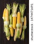 a pile of ripe ears of corn for ... | Shutterstock . vector #1474471691