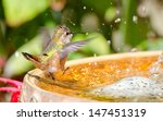 Rufous Hummingbird Dancing In...