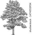 black locust tree illustration  ... | Shutterstock .eps vector #1474553954
