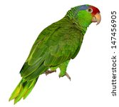 Parrot. Isolated Red Crowned...