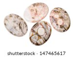 fossil jasper is distinguished... | Shutterstock . vector #147465617