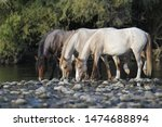 Wild Horses Are Seen At The...