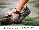 Stock photo playing with a cute cat during a summer camping trip 1474793201