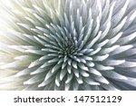 Silversword Endemic Exotic...