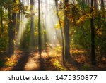 Stock photo walk in the woods pleasant autumn weather sun rays play in the branches of trees 1475350877