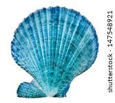 One Blue Seashell Close Up...