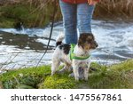 Stock photo woman is walking with a little obedient jack russell terrier dog near a water body 1475567861