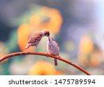 Bird Sparrow Feeds Beak Of His...
