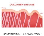 collagen in younger skin and... | Shutterstock .eps vector #1476037907