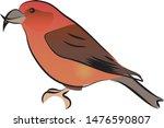 crossbill bird on white... | Shutterstock .eps vector #1476590807