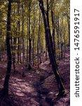 Stock photo beech forest in the selva de irati navarra spain 1476591917