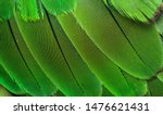 Small photo of closeup shot of parrots feather or parakeet feather