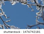Nice background with winter atmosphere - snow on branches around photo and blue sky. In the middle is copy (free) space for picture or text (letters). Christmas or New Year motive for greetings cards.