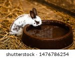 Cute White Rabbit Will Eat...