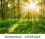 forest landscape   Shutterstock . vector #147691664