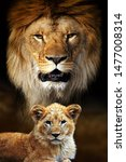big male lion and cub portrait... | Shutterstock . vector #1477008314
