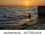silhouette in the sunset of...   Shutterstock . vector #1477031414