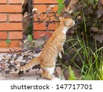 Stock photo red little kitten sniff a flower on sunny day on summer 147717701